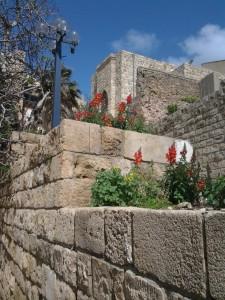 Löwenmäulchen_Jaffa