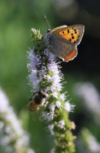 Blüte Hummel Schmetterling