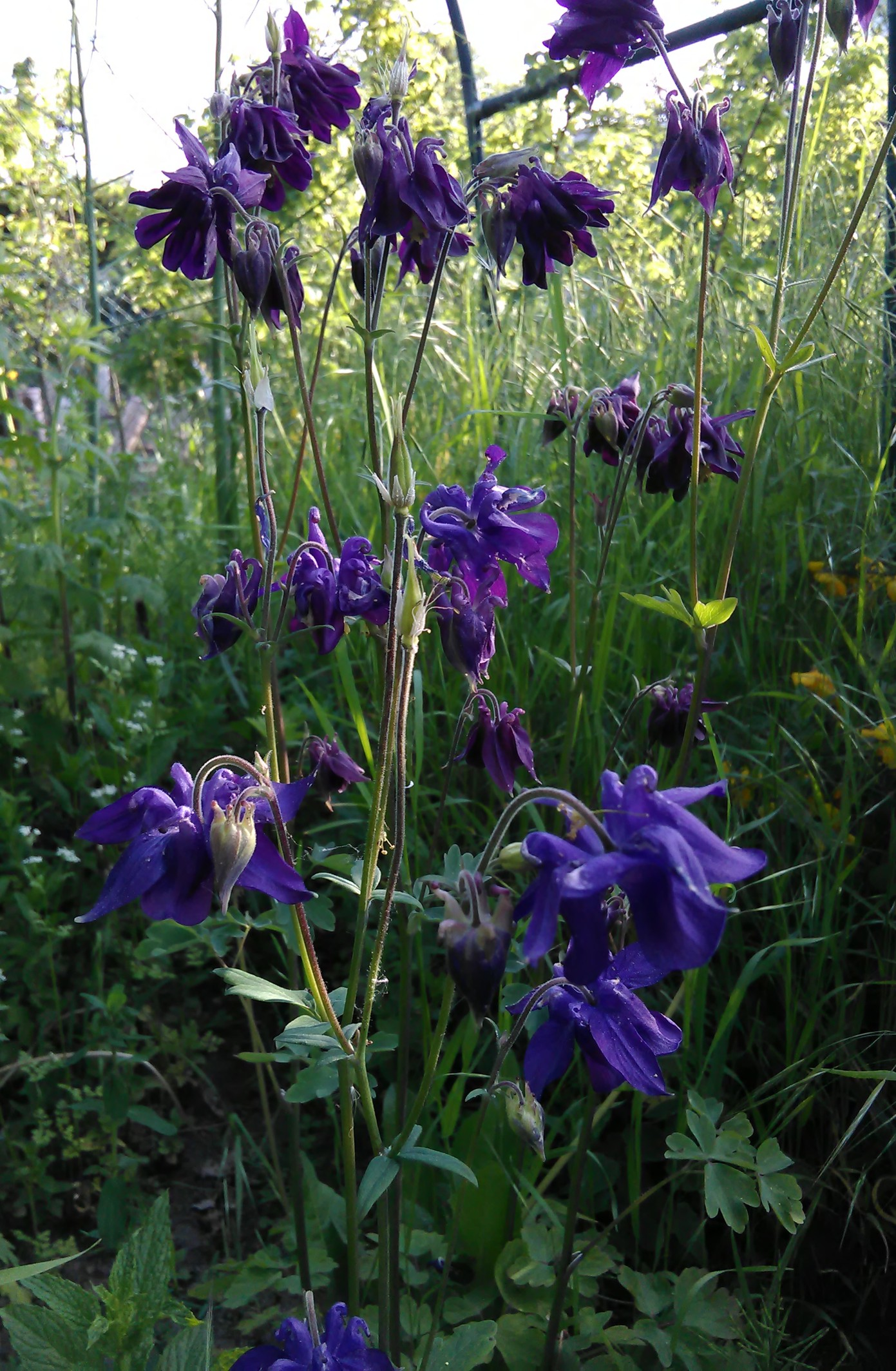 Prächtig Frühjahrsblüher – Stauden Karl @GC_11