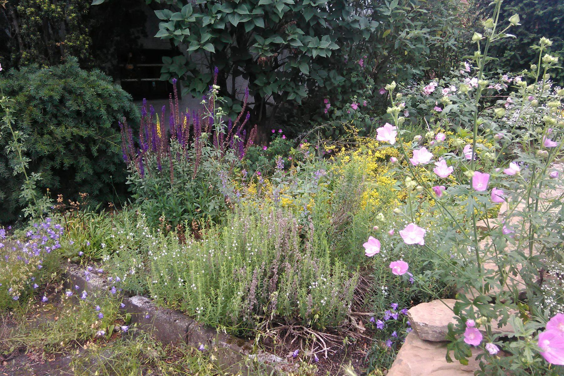 Frühsommer Anfang Juli 2020 von links nach rechts: Rundblättrige Glockenblume, Steppensalbei, Odermennig, Bohnenkraut, Katzenminze, Blut-Strochschnabel, Echtes Labkraut, Rosenmalve, im Hintergrund Buschmalve
